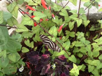 Butterfly Garden Tour pic-2015