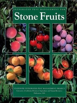 Stone Fruits 3389 small
