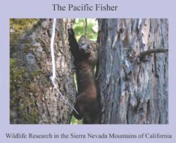 Fisher calendar