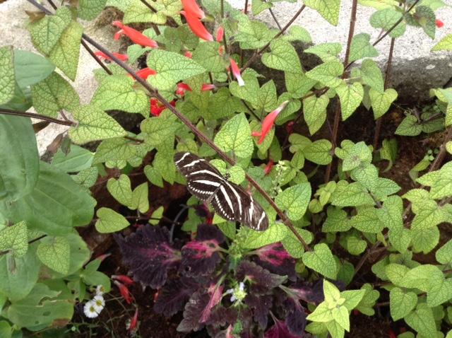 Butterfly Garden Tour pic-2015