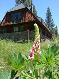 Tahoe City Garden_pinky