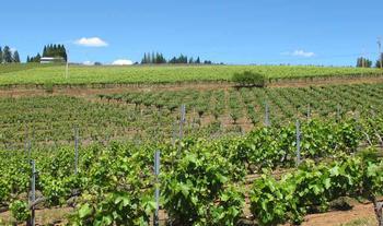 vinyardlandscapLC